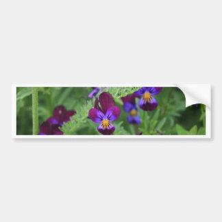 Purple Pansies Bumper Sticker