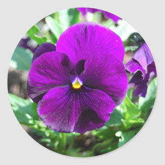 Purple Pansies Classic Round Sticker