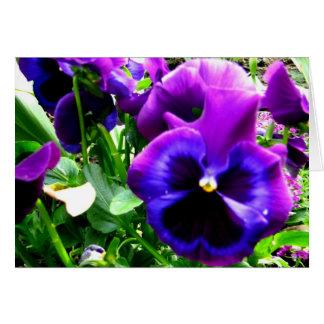 Purple Pansies Greeting Card