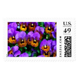 Purple Pansies Large Postage