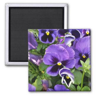 purple pansies magnet