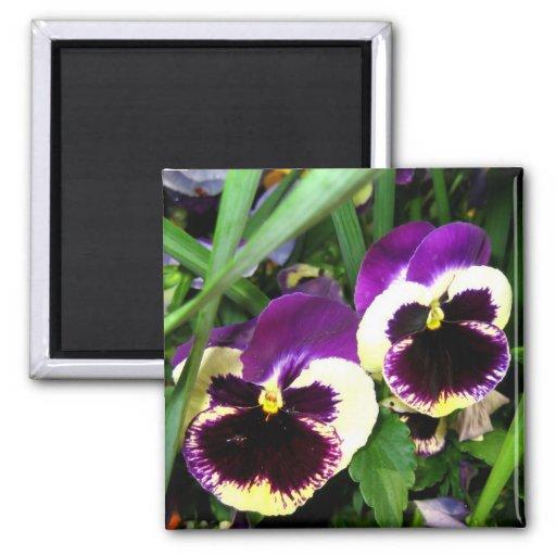 Purple pansies - Magnet