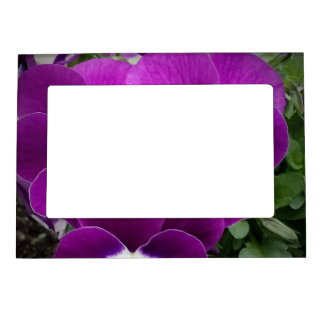 Purple Pansies Magnetic Picture Frame