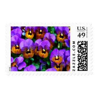 Purple Pansies Medium Postage