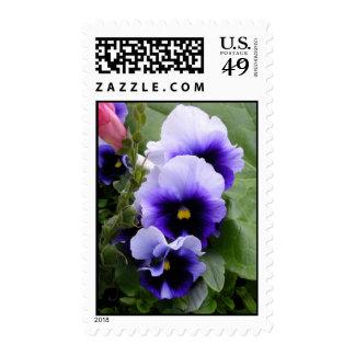 Purple Pansies Postage