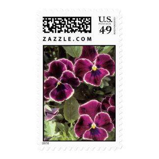 Purple Pansies Postage Stamp