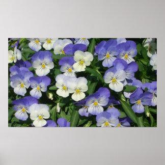 Purple Pansies Print