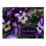 Purple Pansies Save the Date Postcard