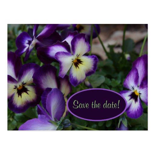 Purple Pansies Save the Date Postcard