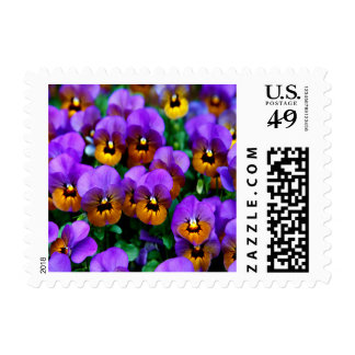 Purple Pansies Small Postage Stamp