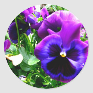 Purple Pansies Stickers