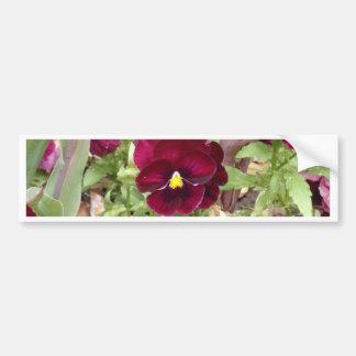 Purple Pansy Bumper Sticker