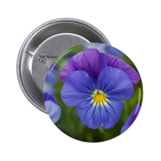 Purple Pansy Buttons