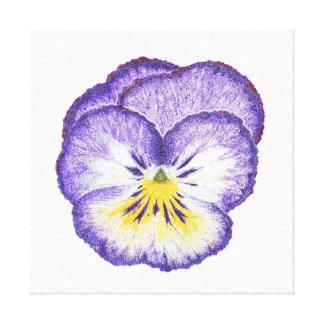 Purple Pansy Canvas