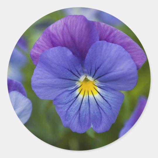 Purple Pansy - Cheerfulness Classic Round Sticker
