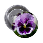 Purple Pansy Close Up 2 Inch Round Button