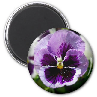 Purple Pansy Close Up 2 Inch Round Magnet