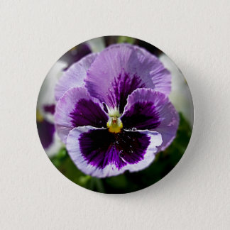 Purple Pansy Close Up Button