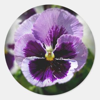Purple Pansy Close Up Classic Round Sticker