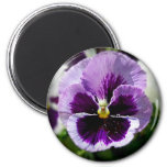 Purple Pansy Close Up Fridge Magnets