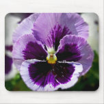 Purple Pansy Close Up Mouse Pads