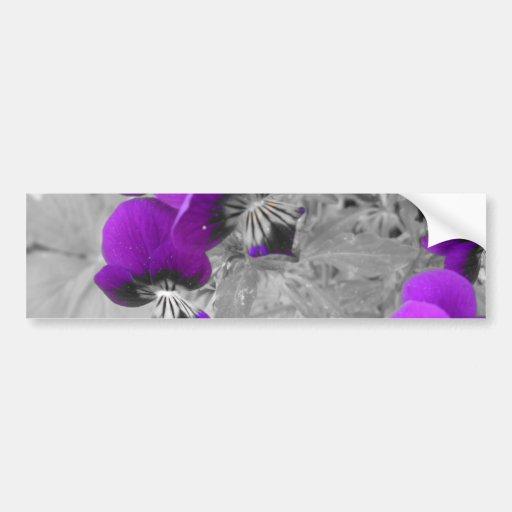 Purple Pansy Effect Bumper Stickers