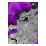 Purple Pansy Effect Greeting Card