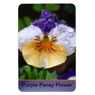 Purple Pansy Flower Rectangular Photo Magnet