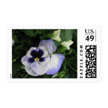 Purple Pansy Flowers Postage