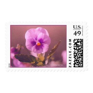 Purple Pansy Impressionist Stamp