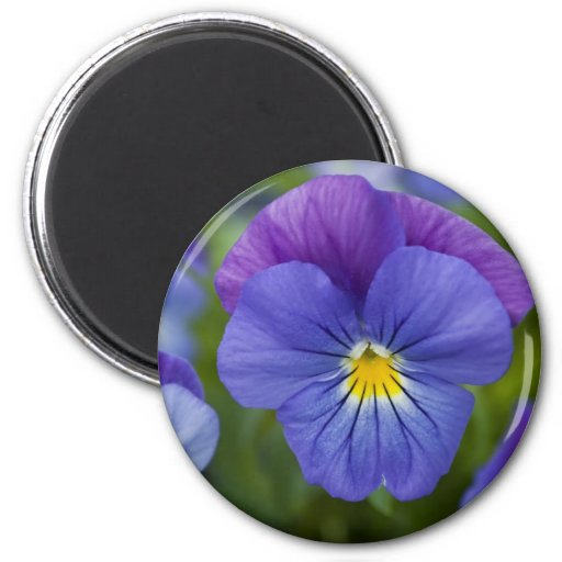 Purple Pansy Magnets