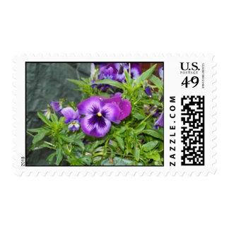 Purple Pansy Postage