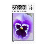 purple pansy postage stamp