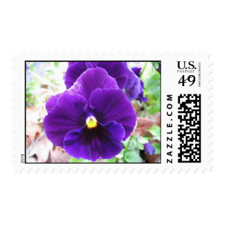 Purple Pansy Postage Stamps
