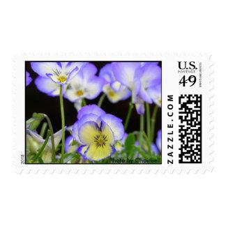 Purple Pansy Stamp