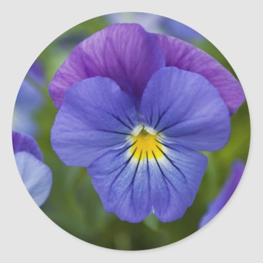 Purple Pansy Round Sticker