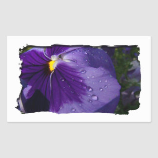 Purple Pansy Rectangle Stickers