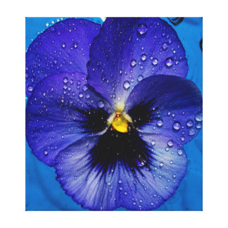 Purple Pansy With Dew Drops Canvas Print