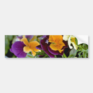 Purple Pansy With Orange Center flowers Bumper Stickers