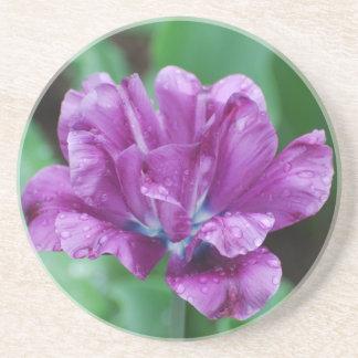 Purple Parrot Tulip Coasters