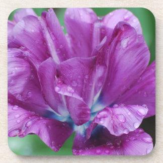 Purple Parrot Tulip Drink Coaster