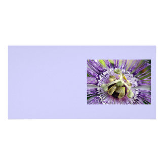 Purple Passion Flower Close Up Card