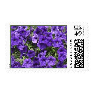 Purple Passion Petunias Postage