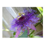 Purple Passion tropical flower blossom up close Postcard