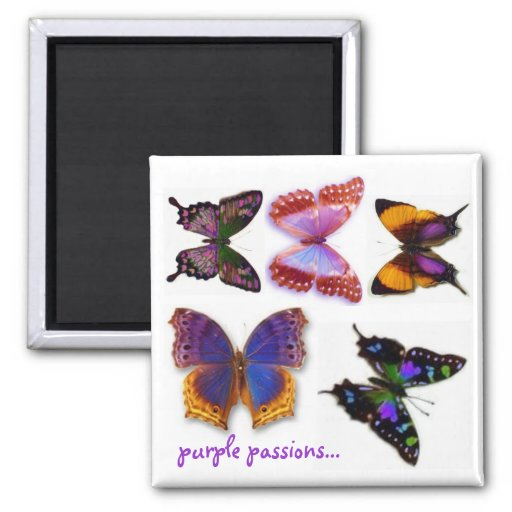 Purple Passions Butterflies Magnet by S Ambrose