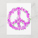 purple peace Flowers