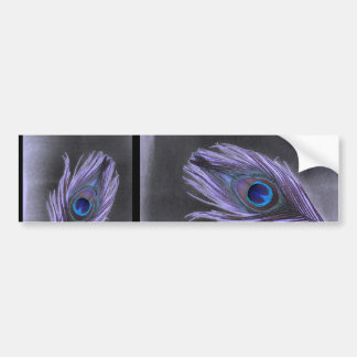 Purple Peacock Feather on Black Bumper Stickers
