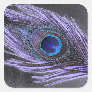 Purple Peacock Feather on Black Square Sticker