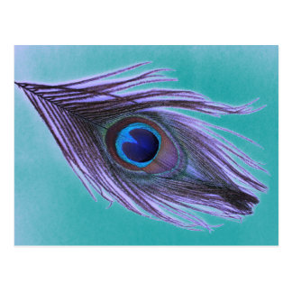 Purple Peacock Feather on Teal Postcard