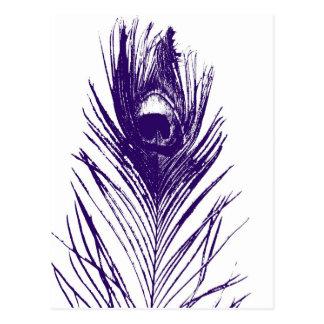 purple peacock feather postcard